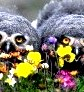 Самые смешные и потешные птицы - фото и видео подборка